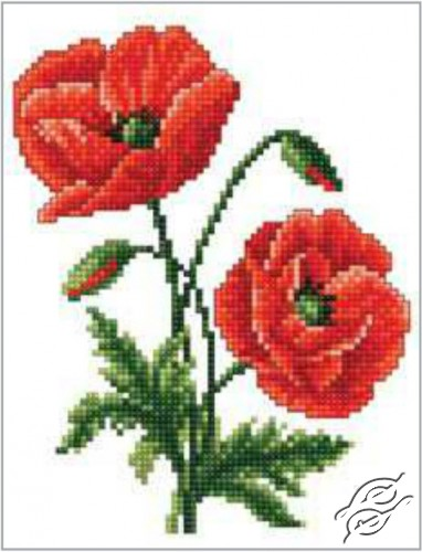 Red Poppies by RTO - C182