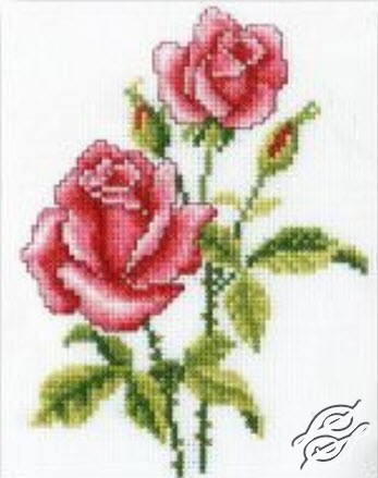 Roses by RTO - C185