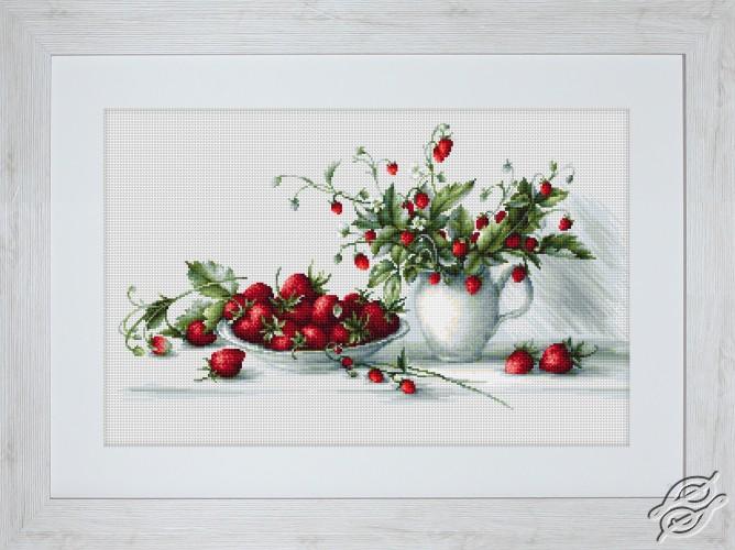 Strawberries by Luca-S - B2277