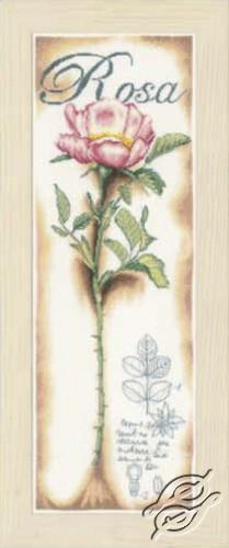 Pink Rose by Lanarte - PN-0154334