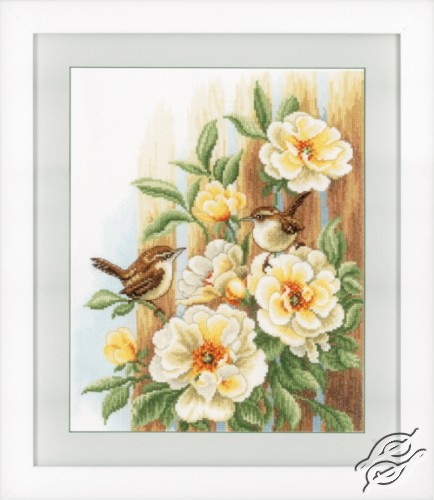 Wrens On Roses by Vervaco - PN-0021782