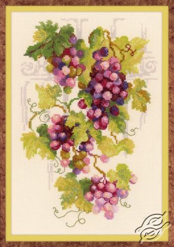 Grapevine by RIOLIS - 1455