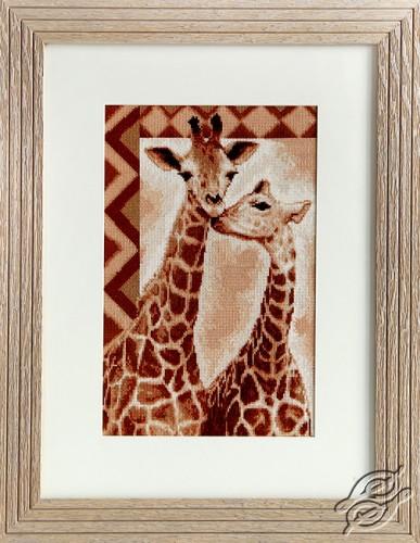 Giraffes by Luca-S - B2216