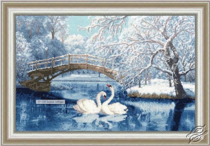 White Swans by Golden Fleece - LP-036