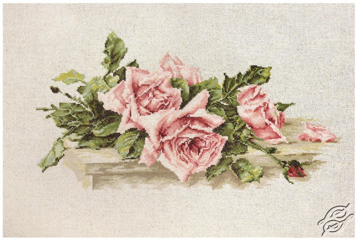 Pink Roses by Luca-S - BL22400