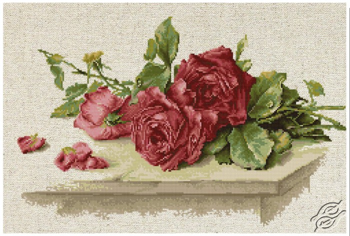 Red Roses by Luca-S - BL22411