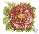 English Rose by RTO - M371