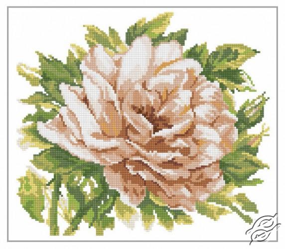 English Rose by RTO - M370