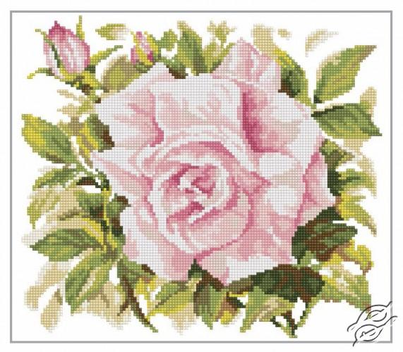 Wild Rose by RTO - M372
