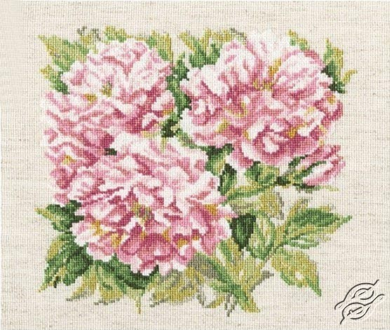 Shrub Roses by RTO - M374