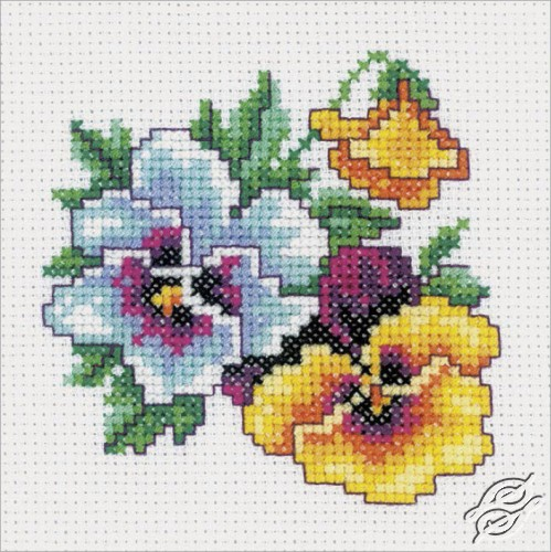 Pansy by RTO - H242
