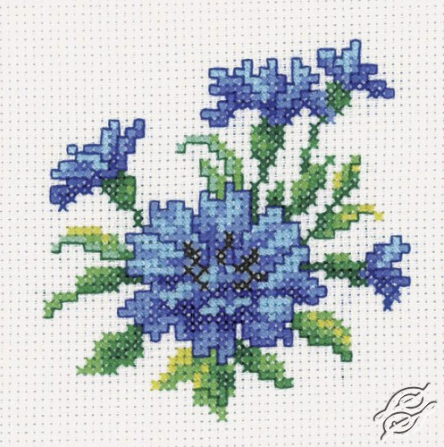 Cornflower by RTO - H246