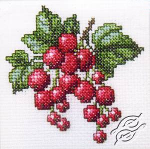 Redcurrant by RTO - H252