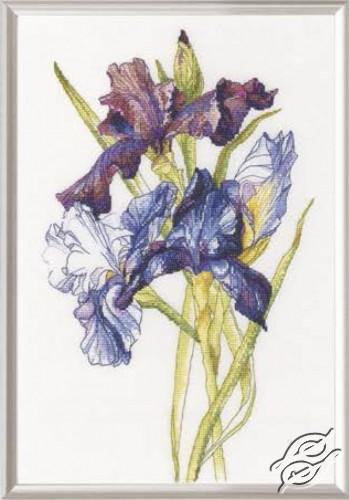 Irises Rainbow by RTO - M580