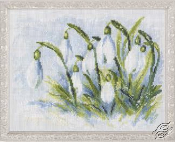Early Snowdrops by RTO - M585