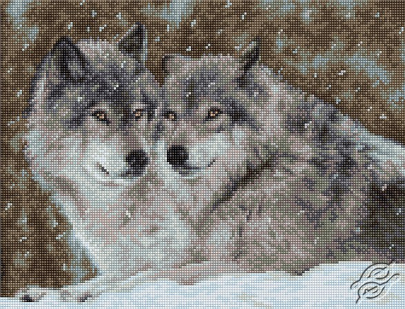 Two Wolves by Luca-S - B2291