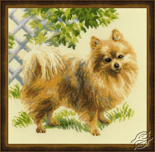 Pomeranian by RIOLIS - 1585