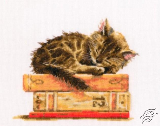 Cat's dream by RTO - M642