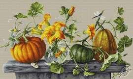 Pumpkins by Luca-S - B2303