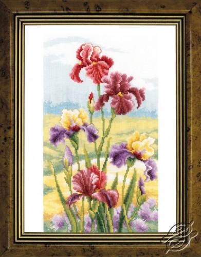 Irises at Dawn by Vervaco - PN-0148482