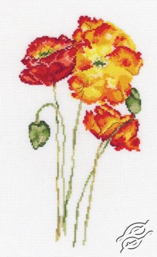 Silk Poppies by RTO - M628