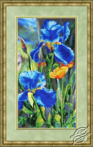 Velvet Irises by Golden Fleece - RT-104