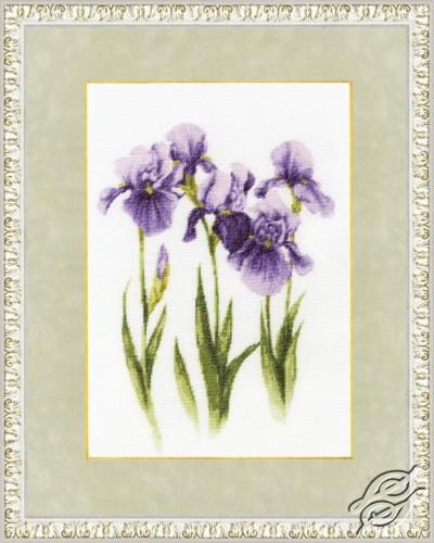Watercolor Irises by Golden Fleece - BR-017