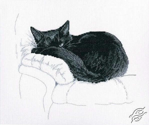 Among Black Cats II by RTO - M668