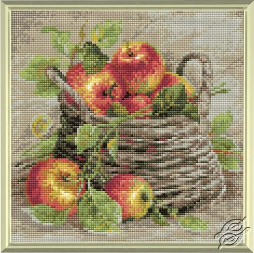 Ripe Apples by RIOLIS - AM0015