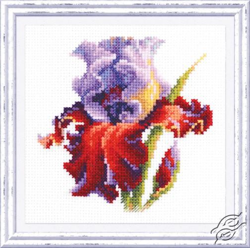 Iris by Magic Needle - 150-011