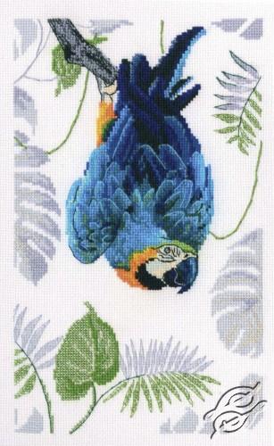 Macaw by RTO - M745
