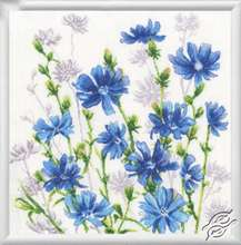Chicory Blossoms by RTO - CU059
