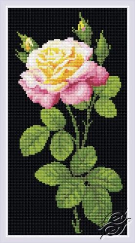 Wonderful Rose by RIOLIS - AM0024