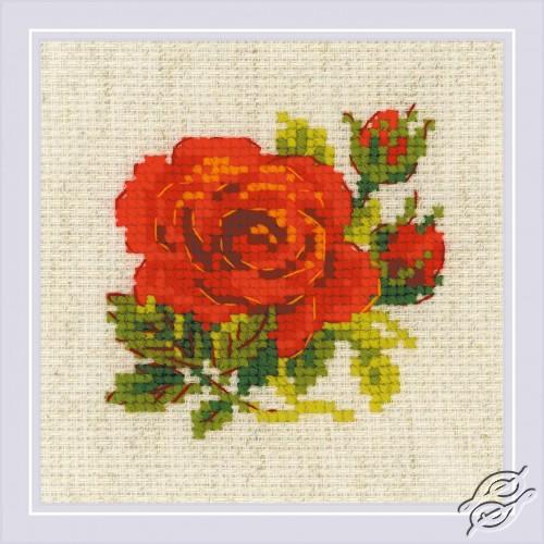 Red Rose by RIOLIS - 1843