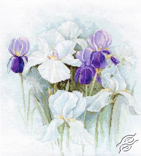 Irises by Luca-S - B2367