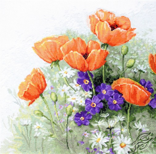 Poppies by Luca-S - B2368