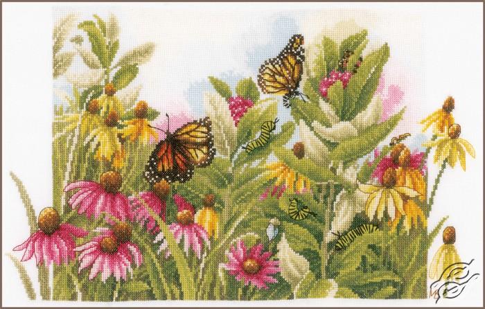 Butterflies & Coneflowers by Lanarte - PN-0179972