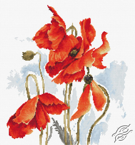 The Poppies by Luca-S - B2374