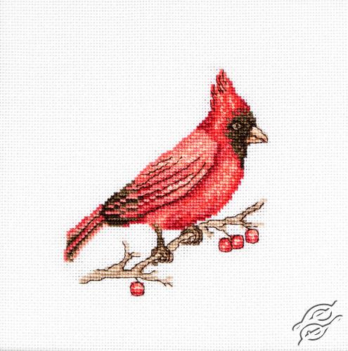 Cardinal by Luca-S - B1156