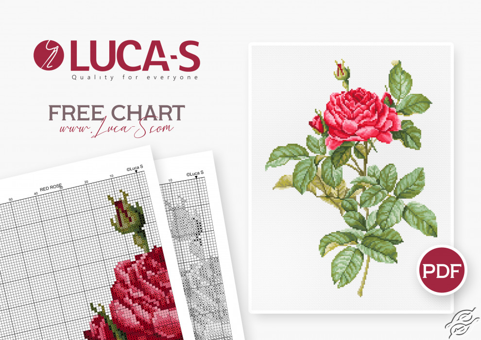 Red Rose by Luca-S - GSLF002