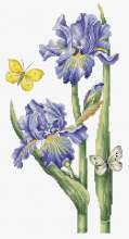 May Iris by Luca-S - B7001